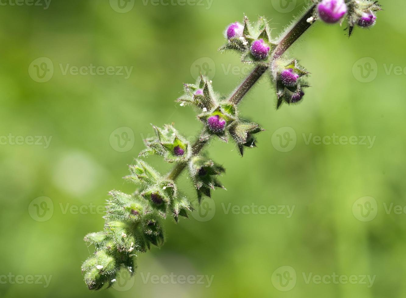 met dauw bedekte wilde bloem foto