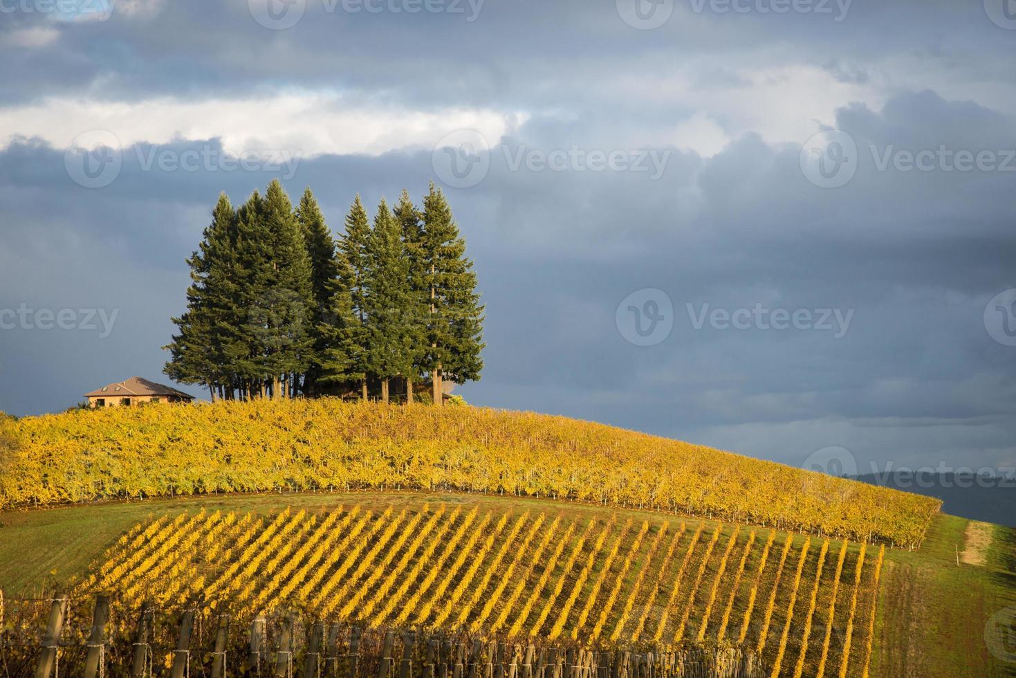 herfst wijngaarden, Willamette Valley, Oregon foto