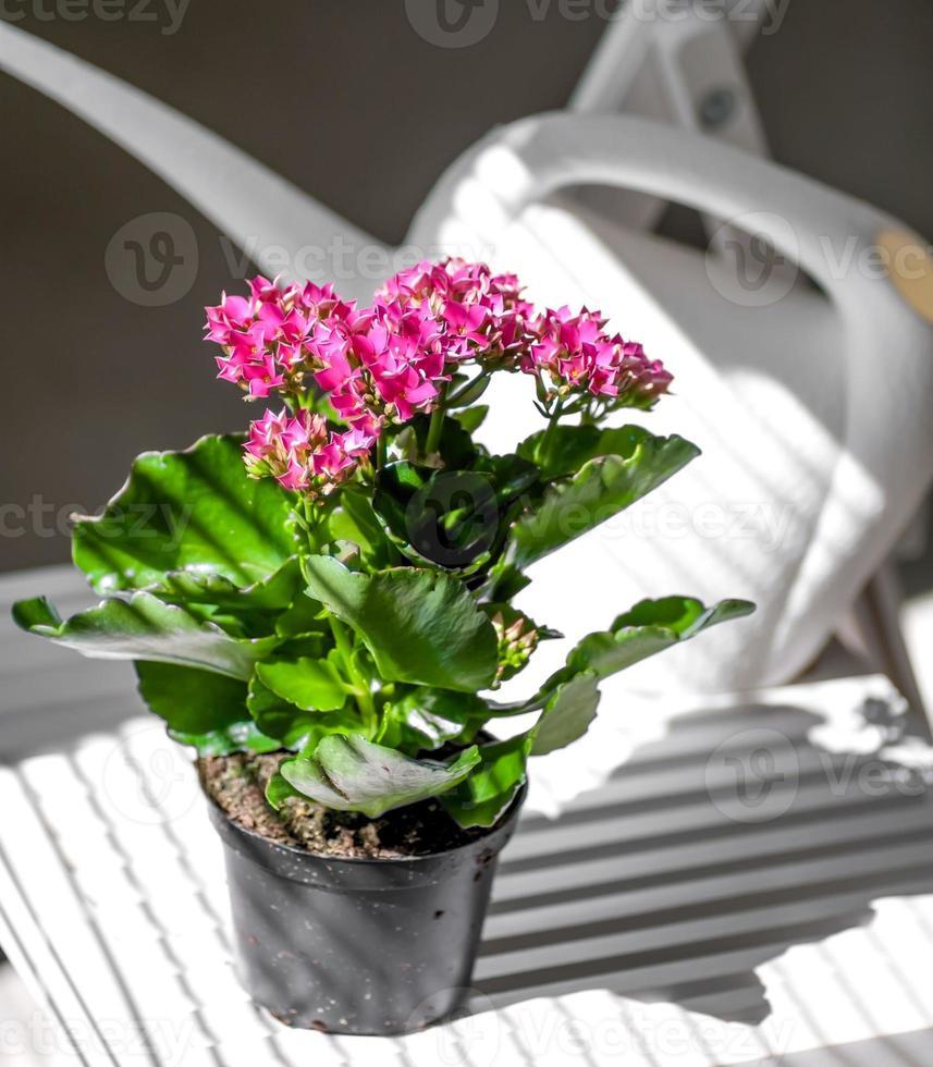 Flor roja en una maceta contra regadera blanca foto
