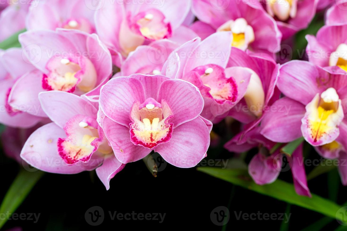 prachtige orchideebloemen. foto
