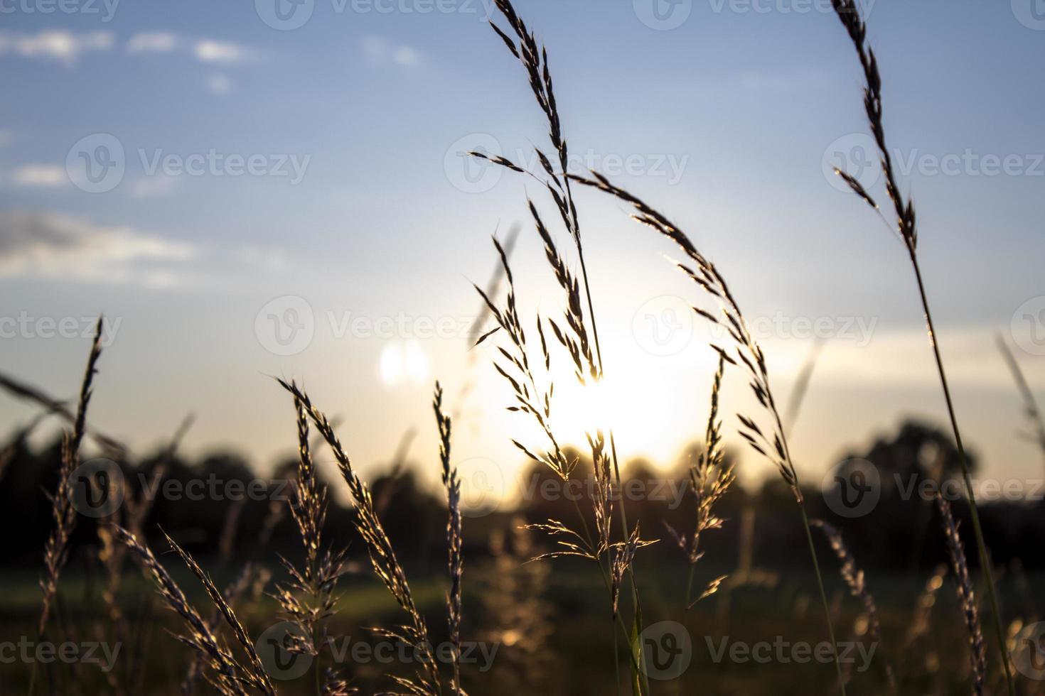hachas de trigo con puesta de sol foto