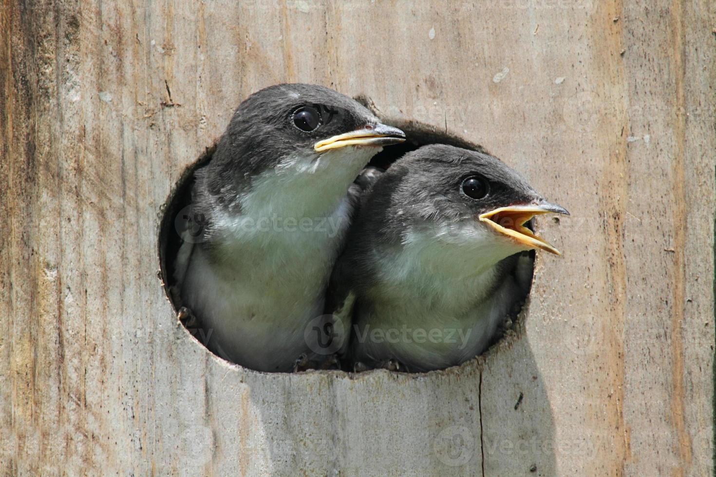 pajaritos en una casa de aves foto