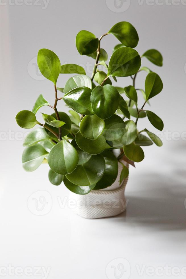 grünpflanze foto