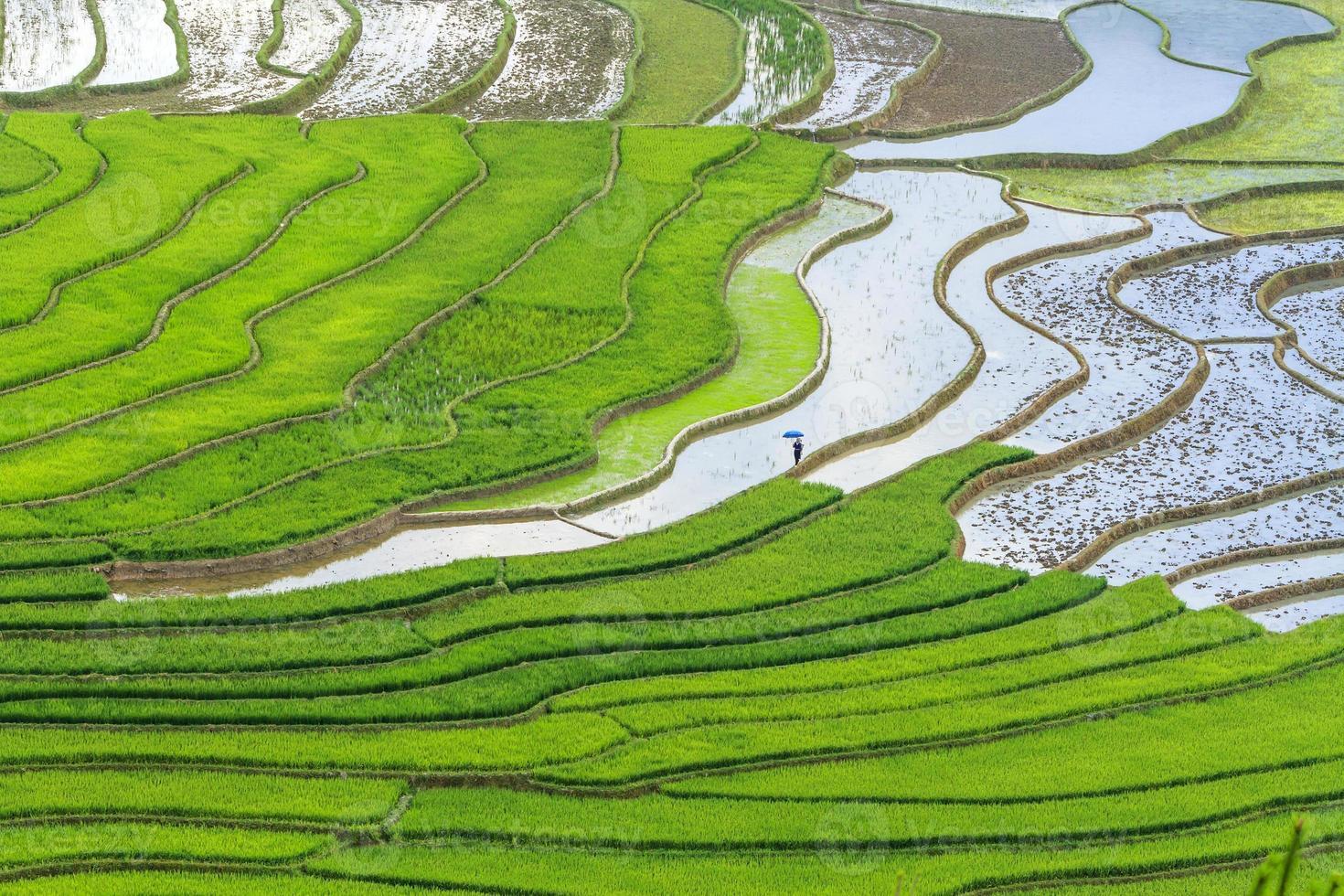 campo de arroz en terrazas foto