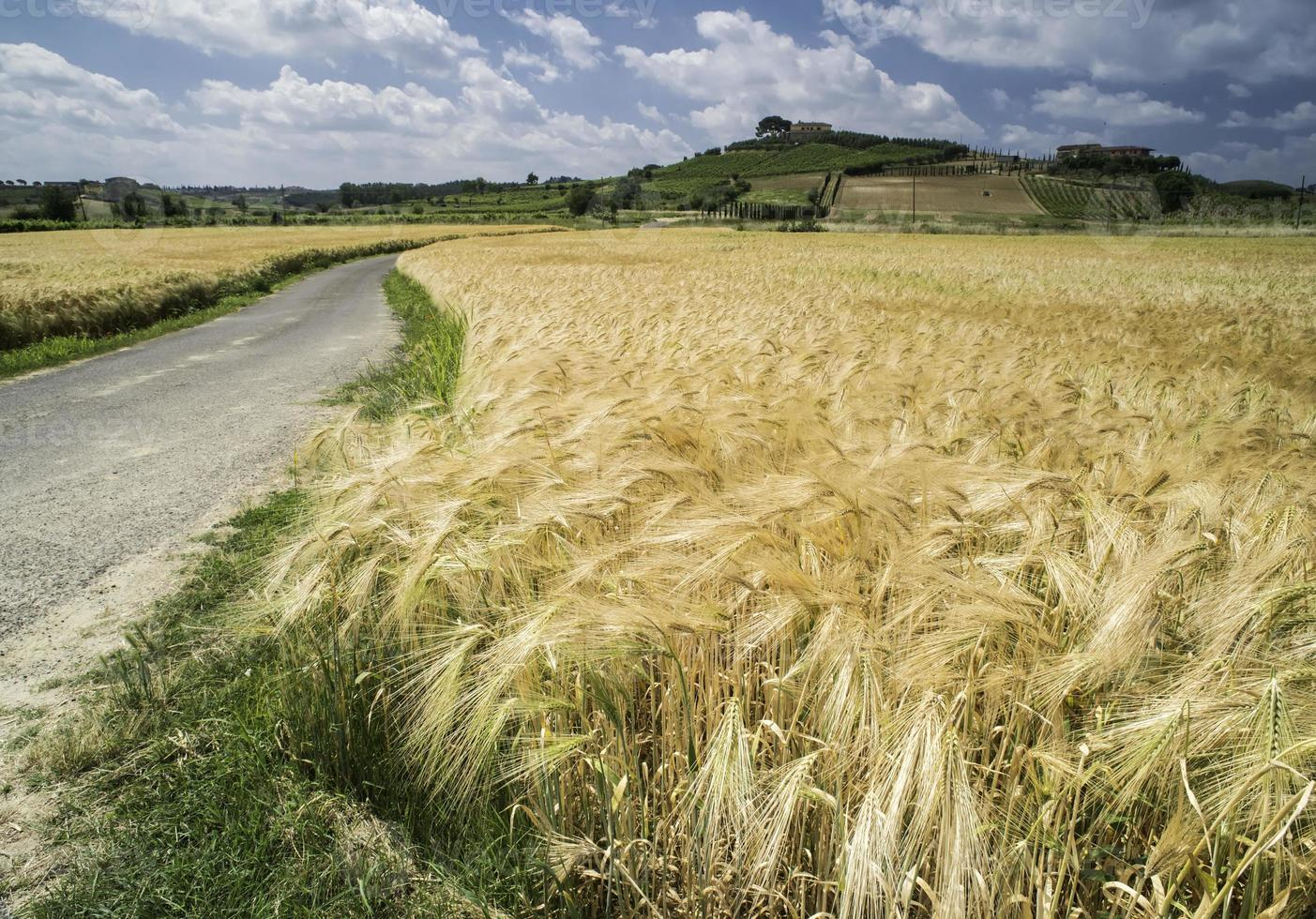 Cereal crops and farm in Tuscany photo