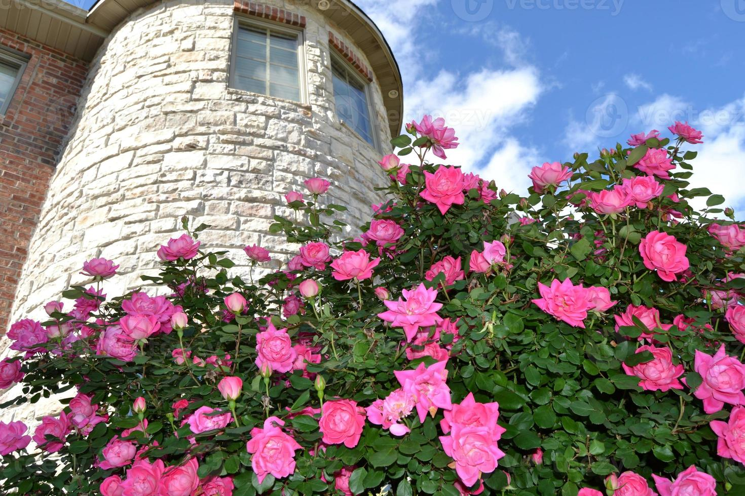 castillo rosado foto