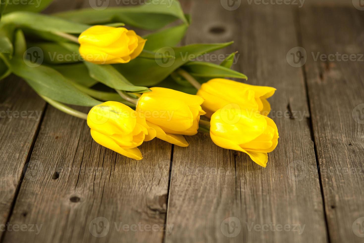 Yellow tulips on a wooden surface photo