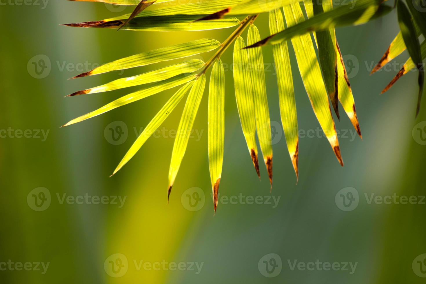 Bamboo leaves. photo