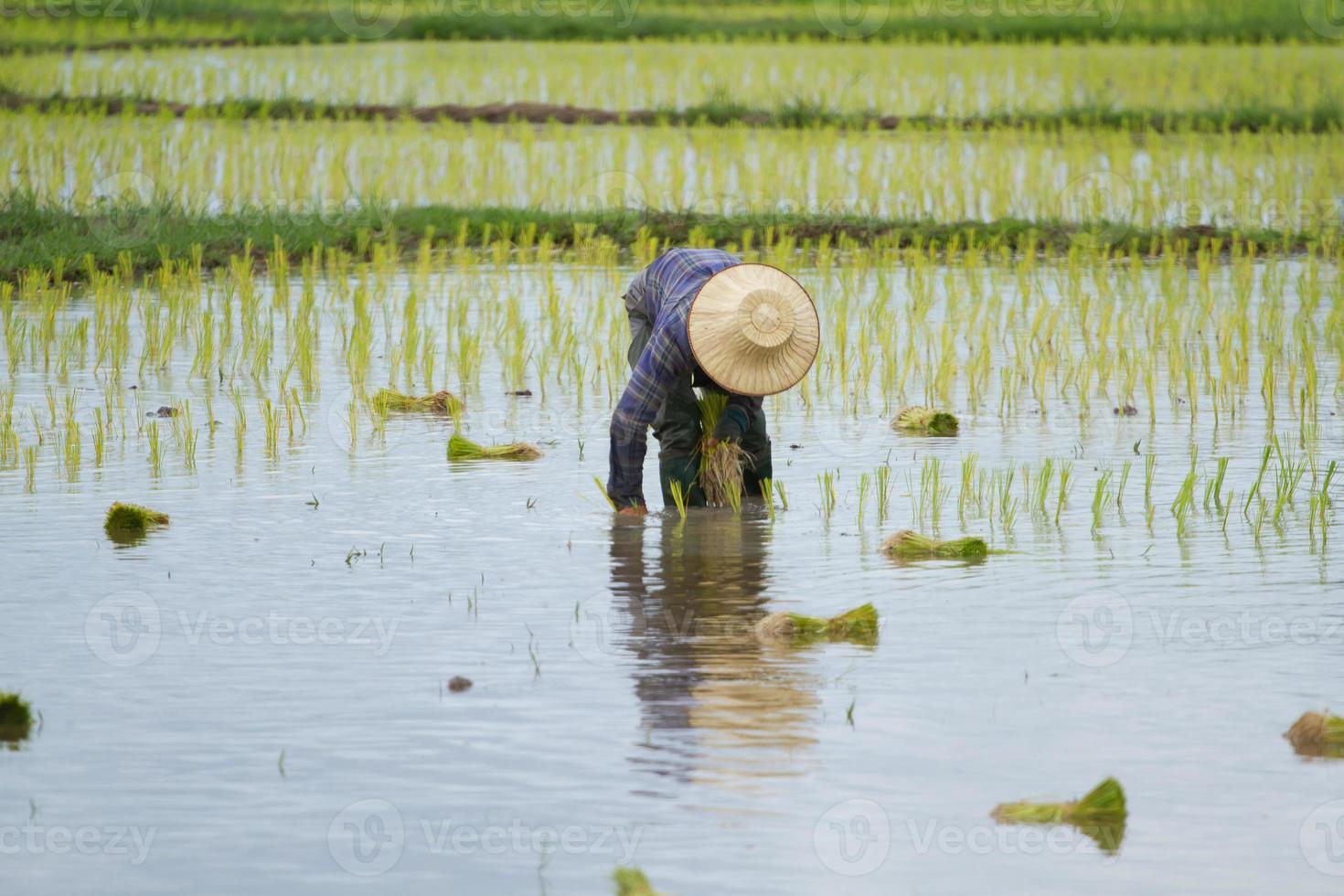 Thai peasant agriculture photo
