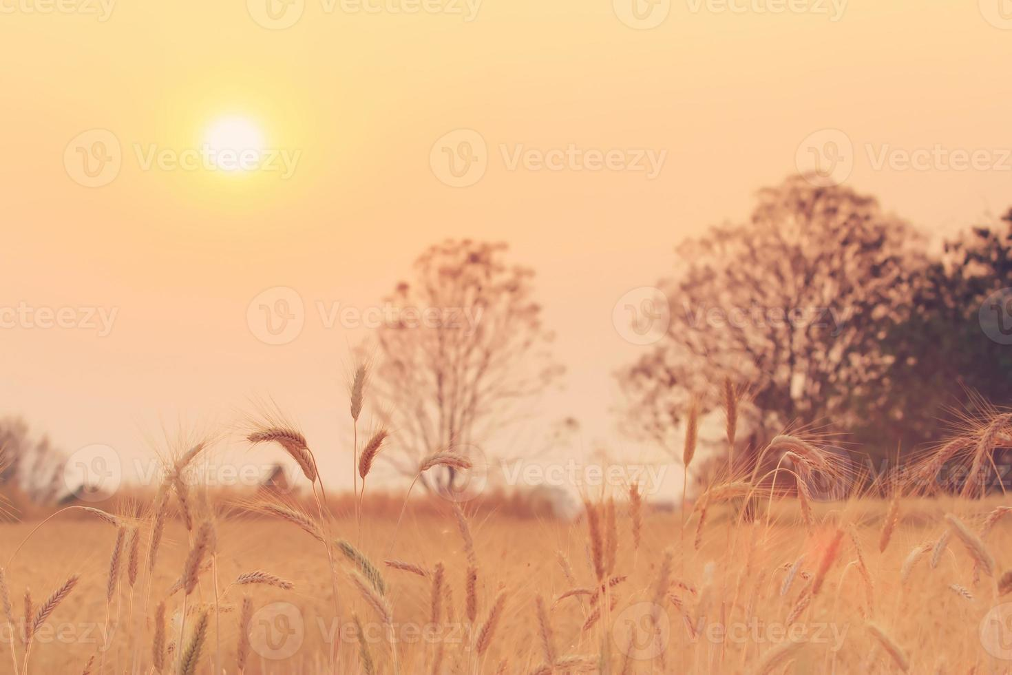 Bales in field and sunset photo