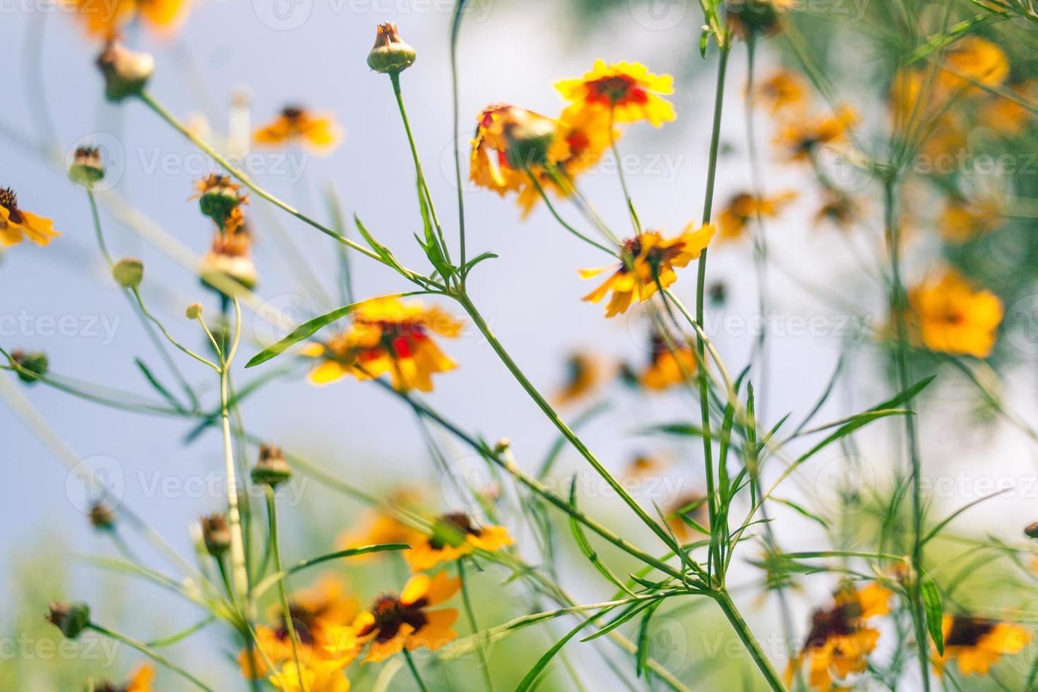 flores contra el cielo azul foto