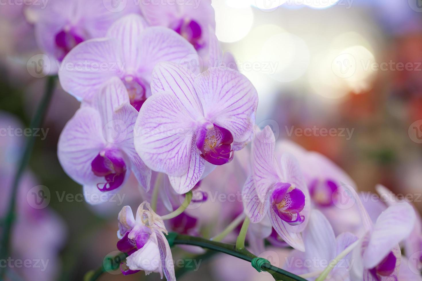flores de orquídeas foto