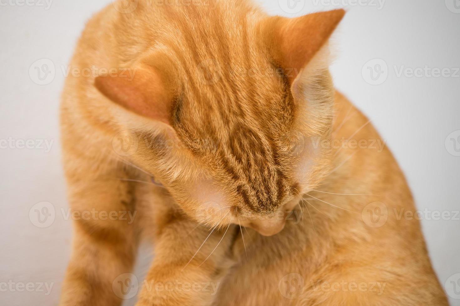 gato naranja en casa 1 foto