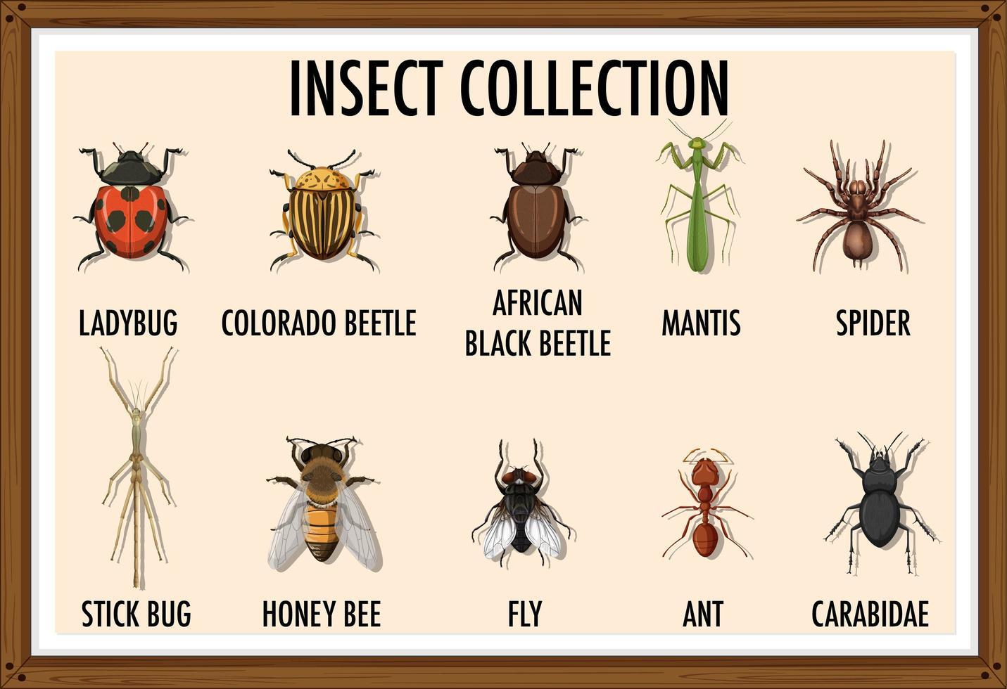 colección de insectos en un marco de madera. vector