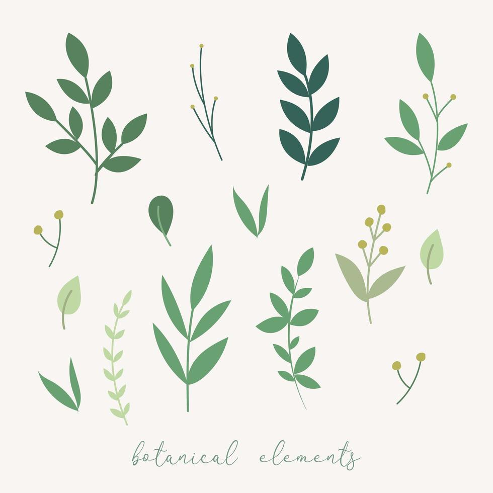 elementos de decoración botánica. vector