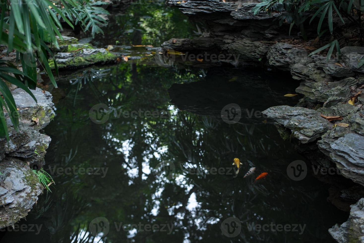 pez dorado en el estanque en un jardín chino foto