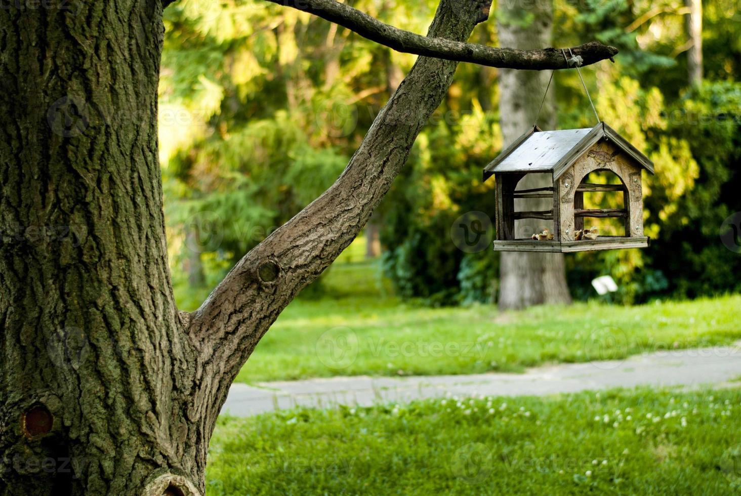 parque en comedero de madera para pájaros foto