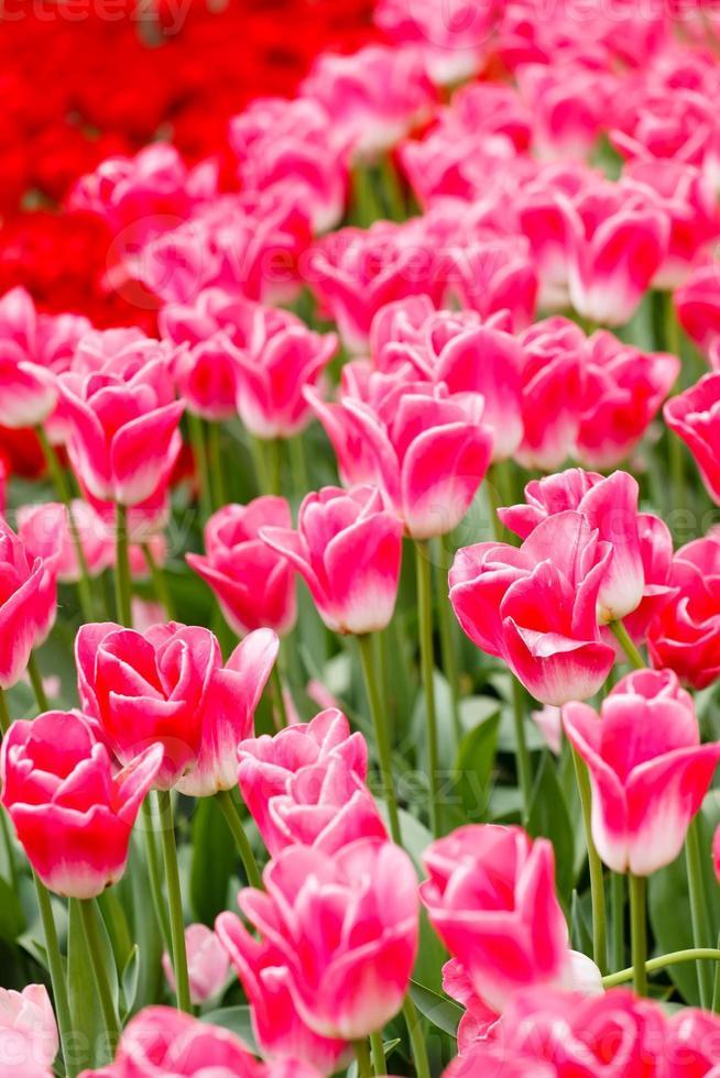 spring garden photo