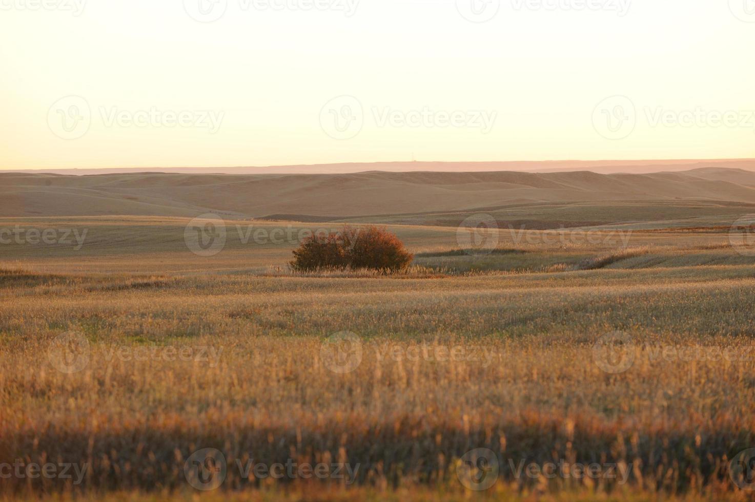campo de hierba foto
