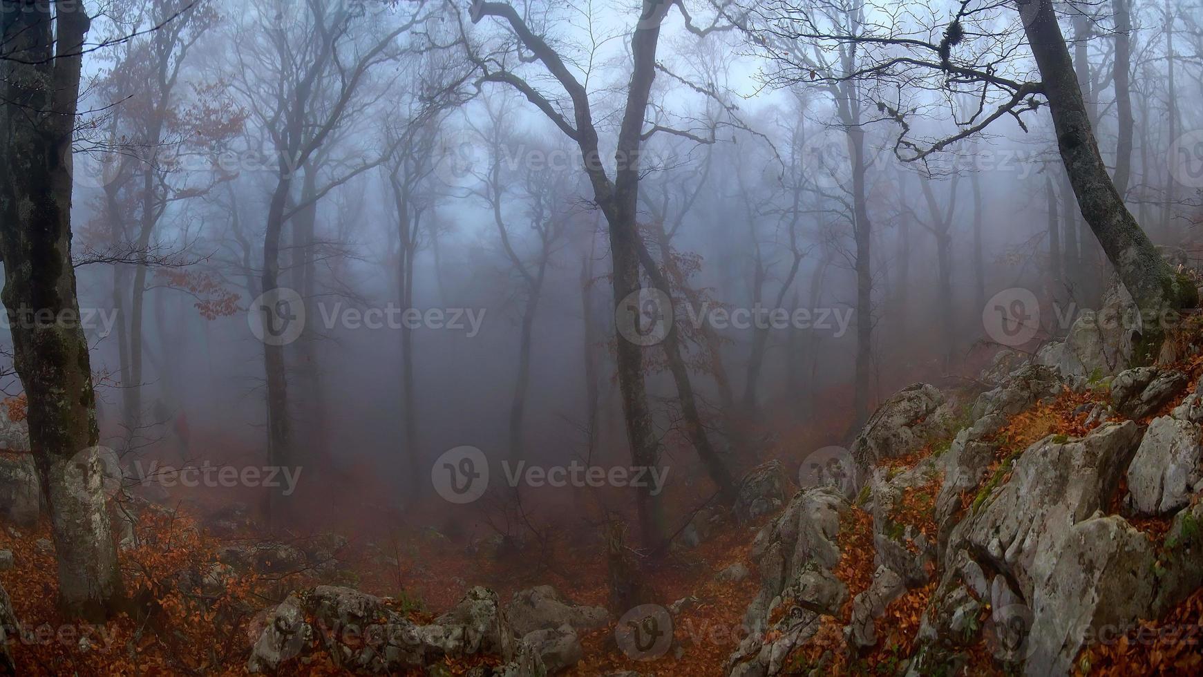 madera brumosa foto