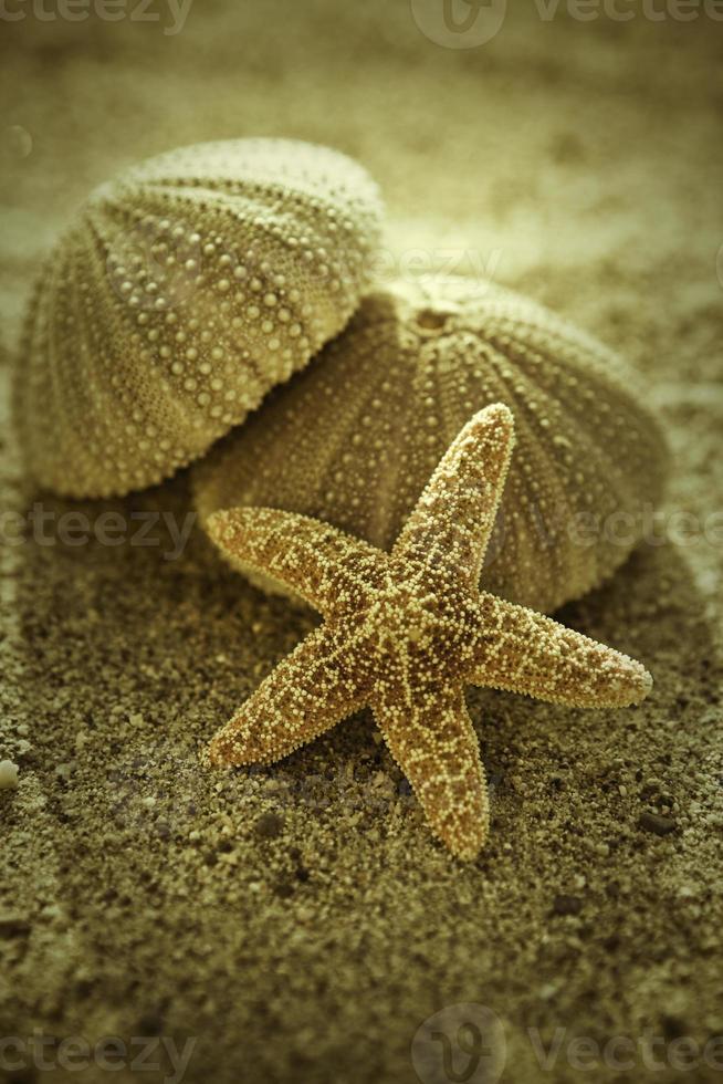 Star fish and Urchin photo