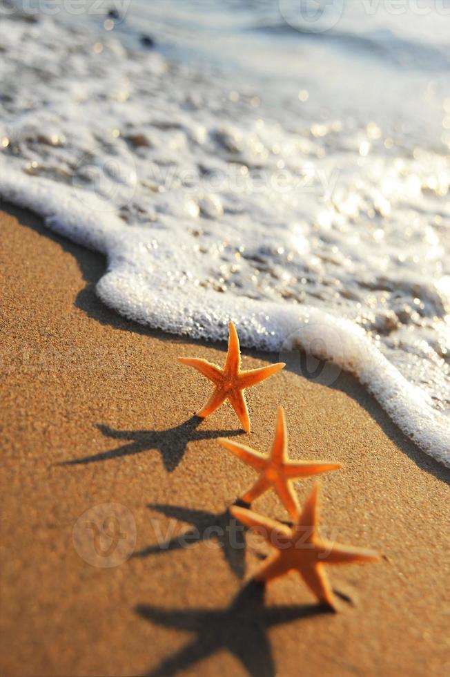 estrellas de mar foto