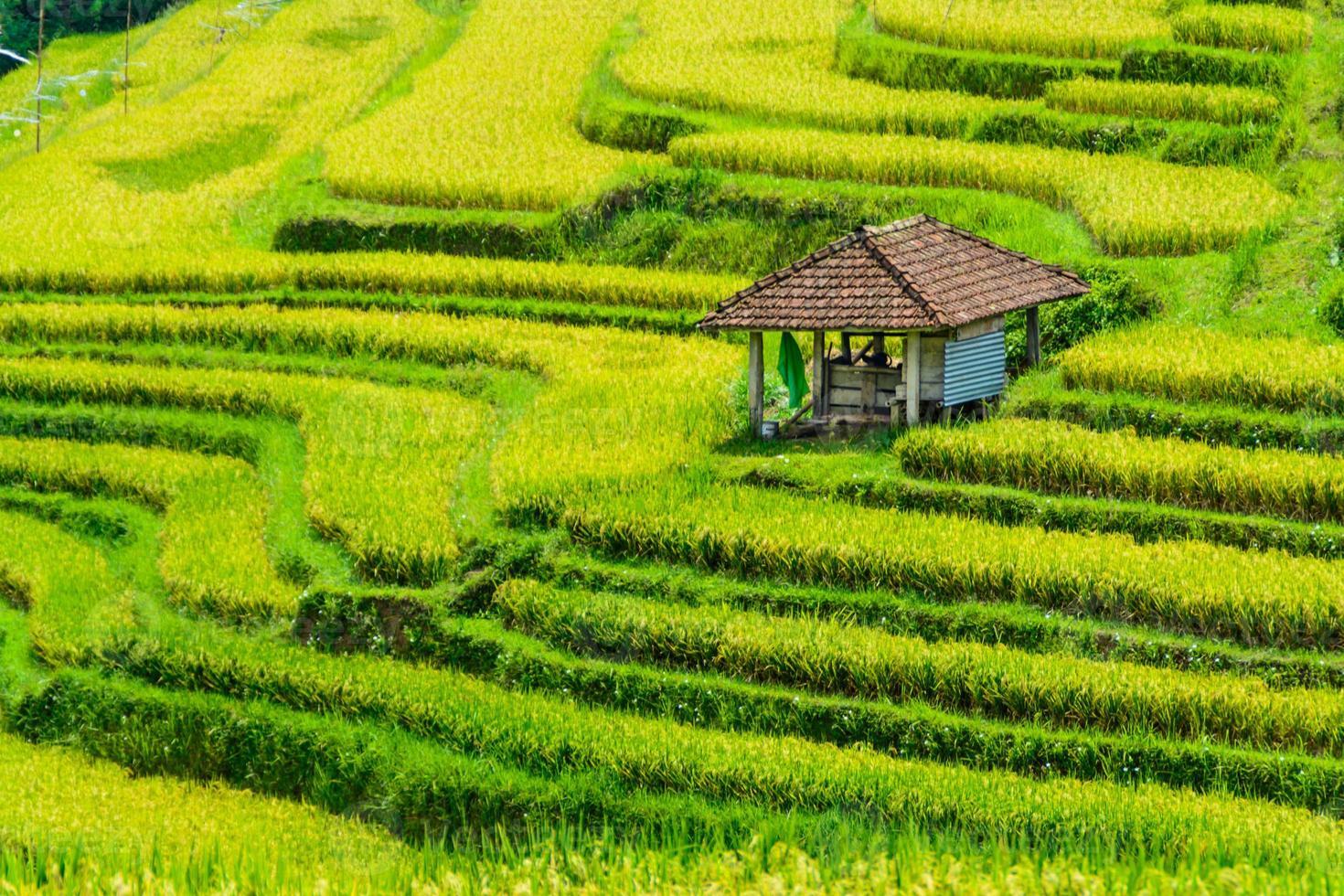 terraza de arroz escalonada foto