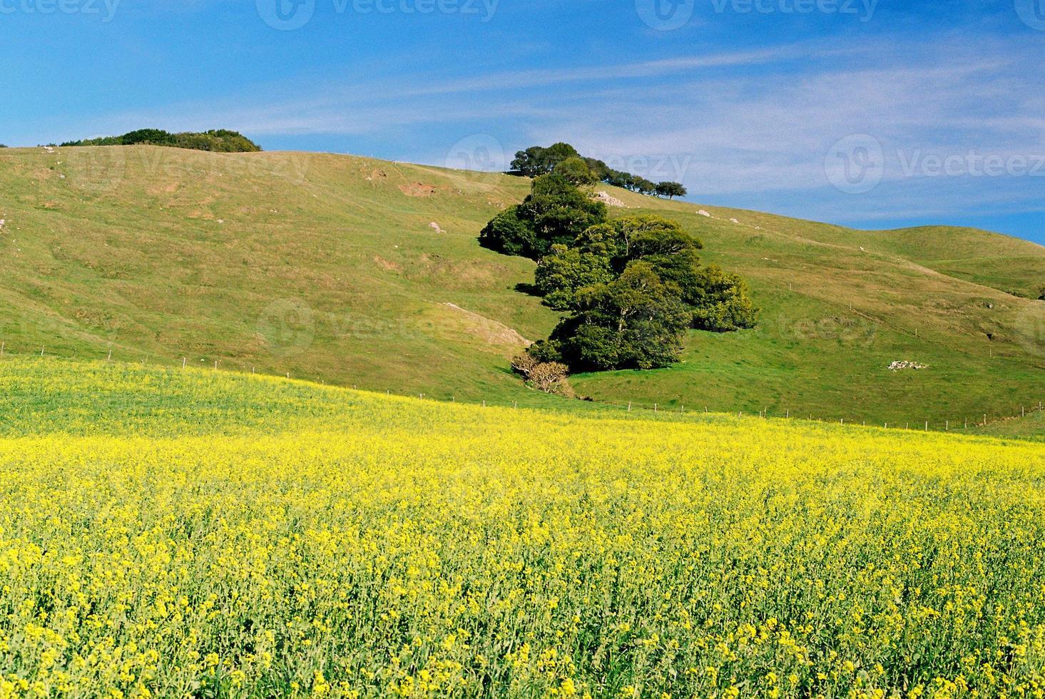prado de california foto