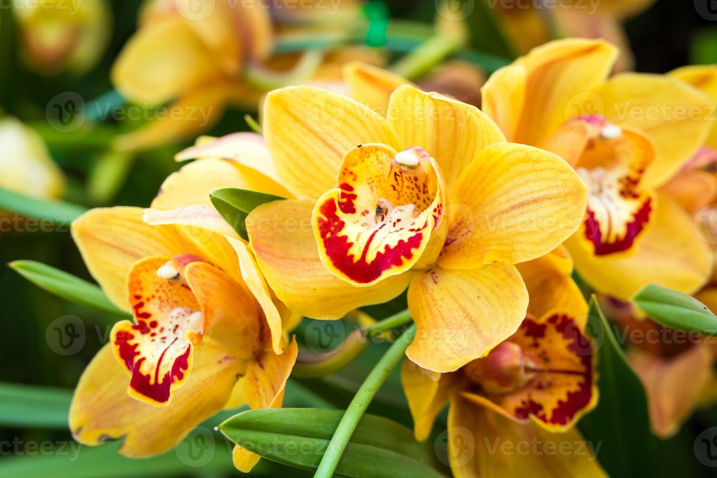 Beautiful orchid flowers. photo