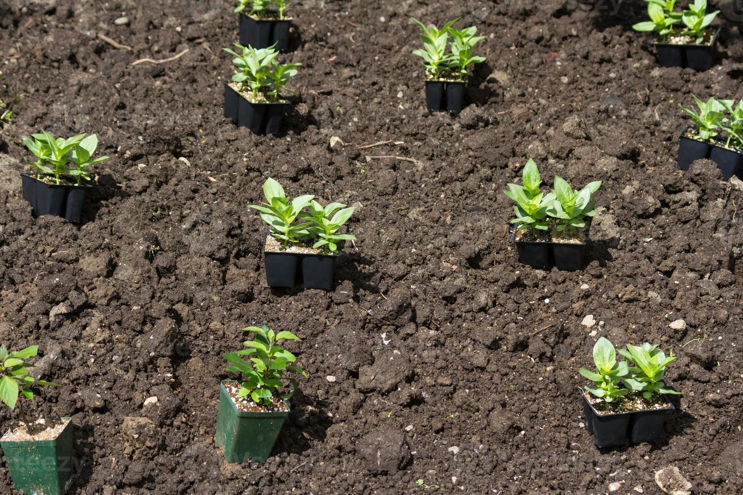 Flower Seedling photo