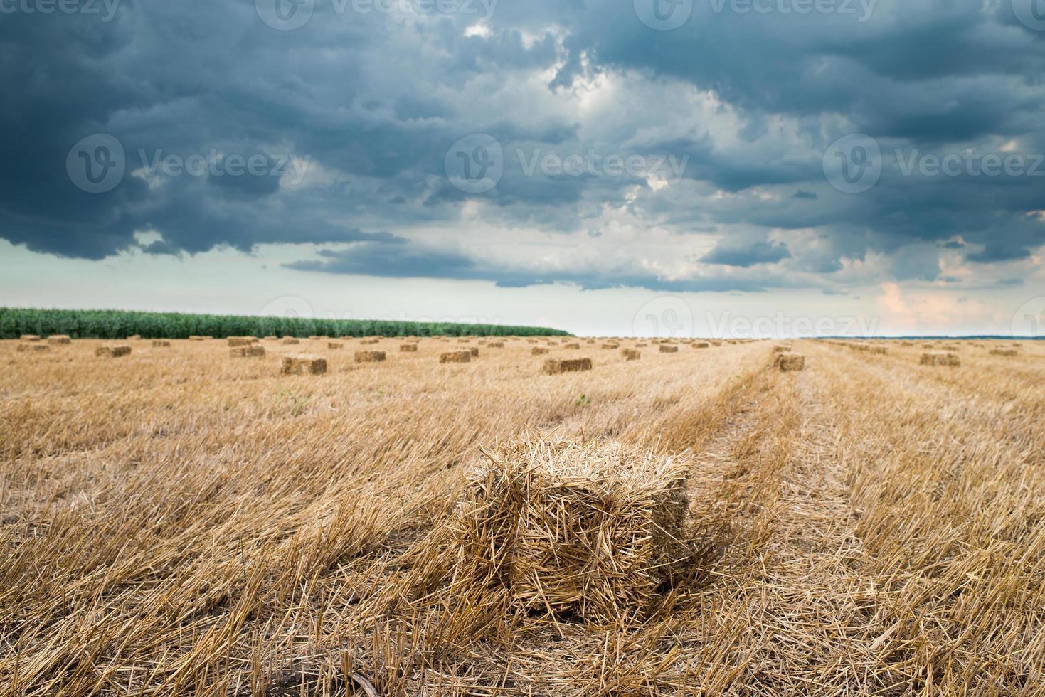 bale of straw photo