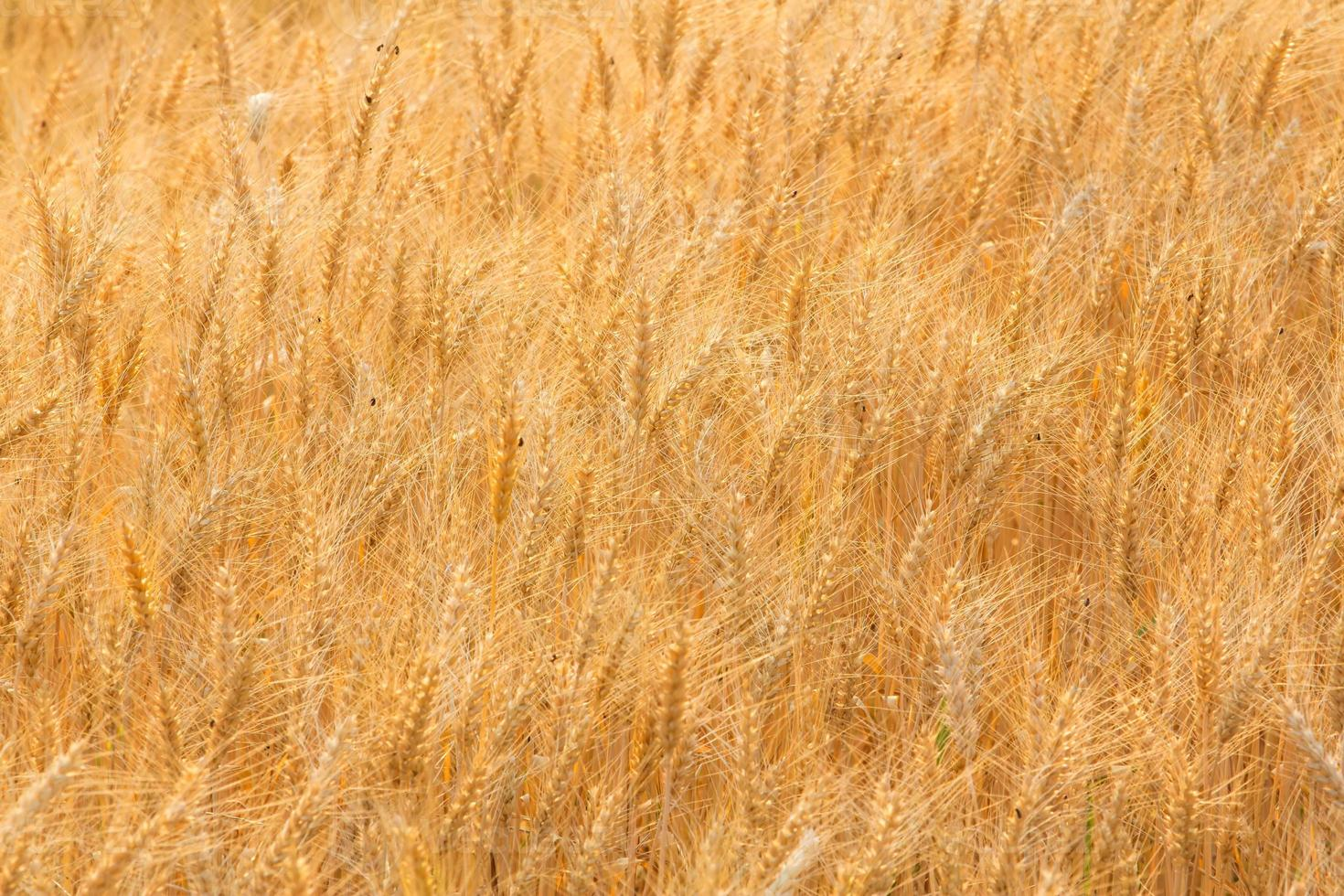 Bales in field,soft focus photo