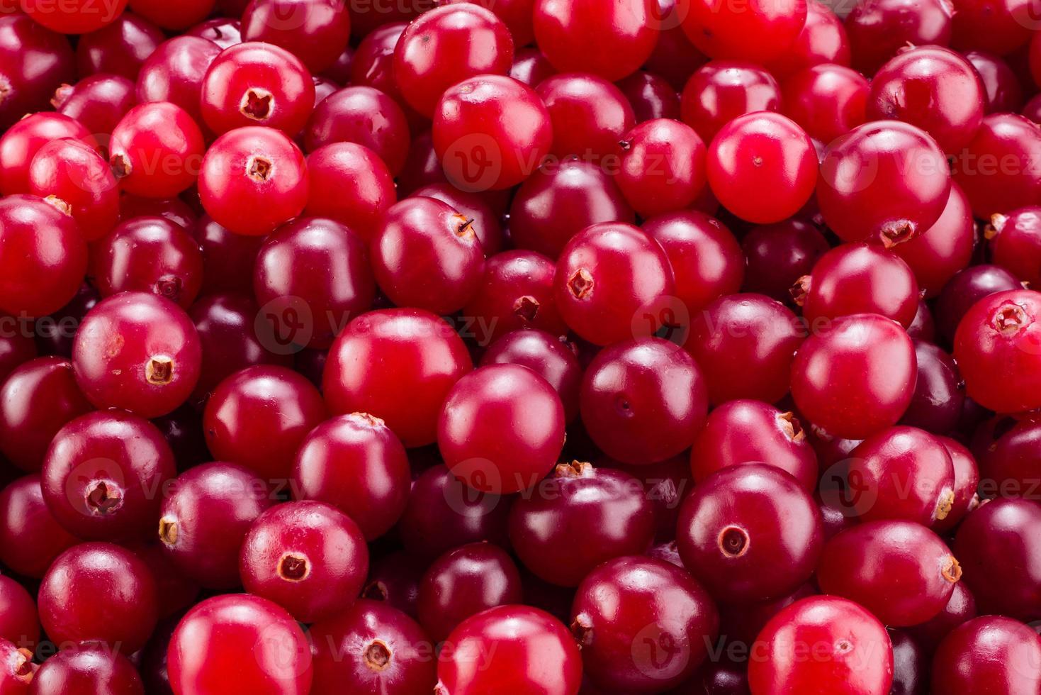 Cranberry macro. Background. photo