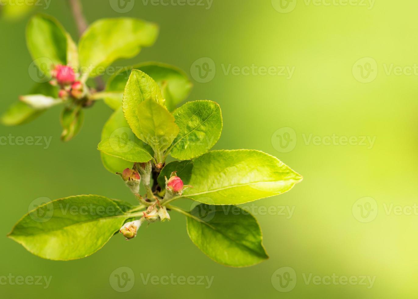 Pink flower buds photo