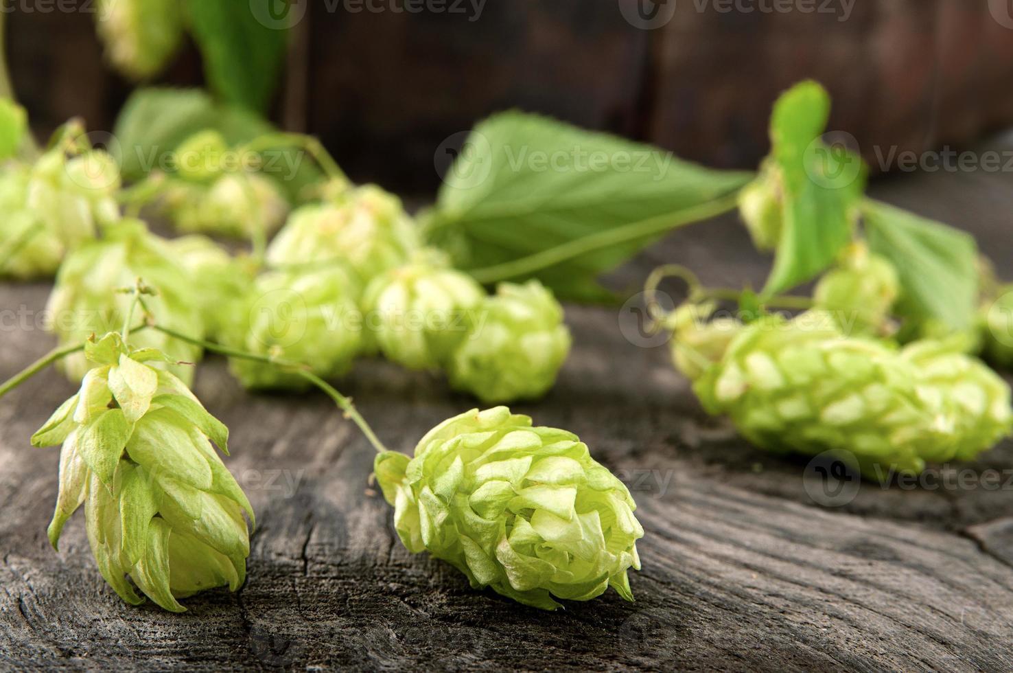 Hops lying on the beer barrel oak photo