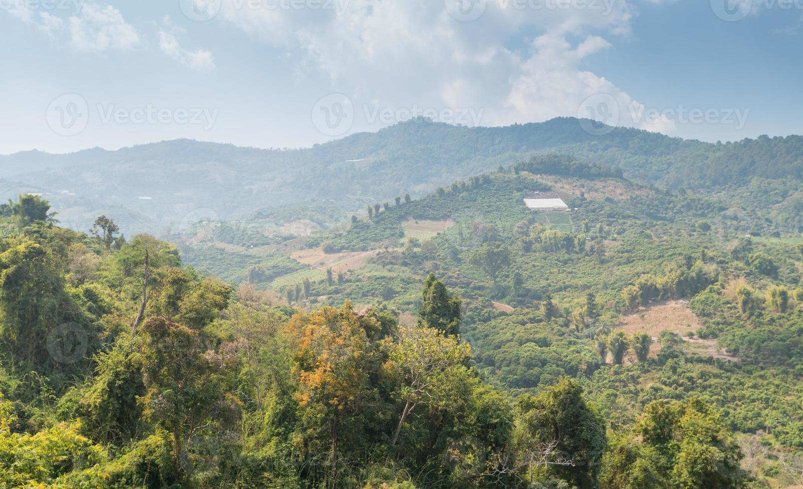 Deforestation on the mountain for agricultural in Thailand. photo