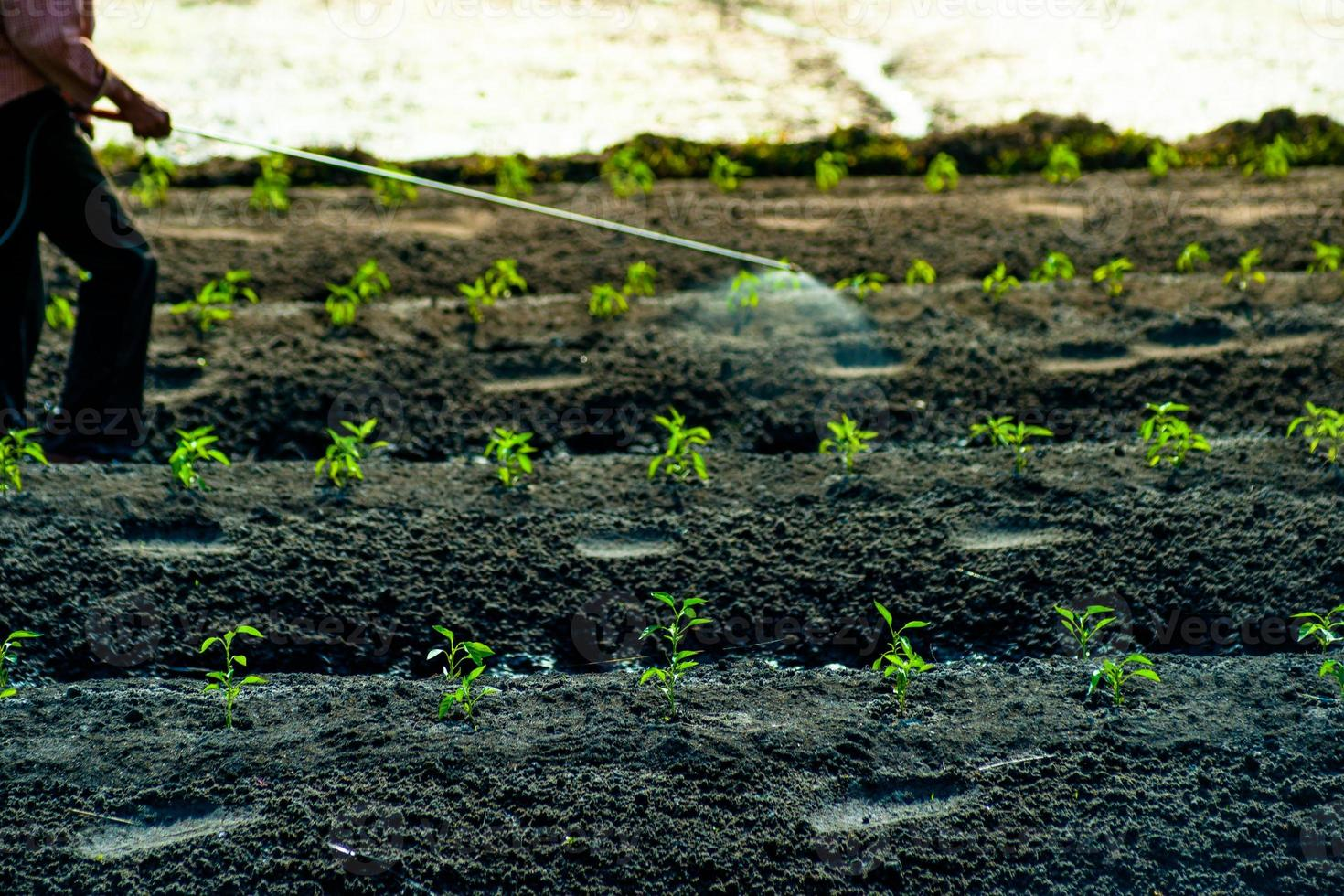 insecticides spraying photo