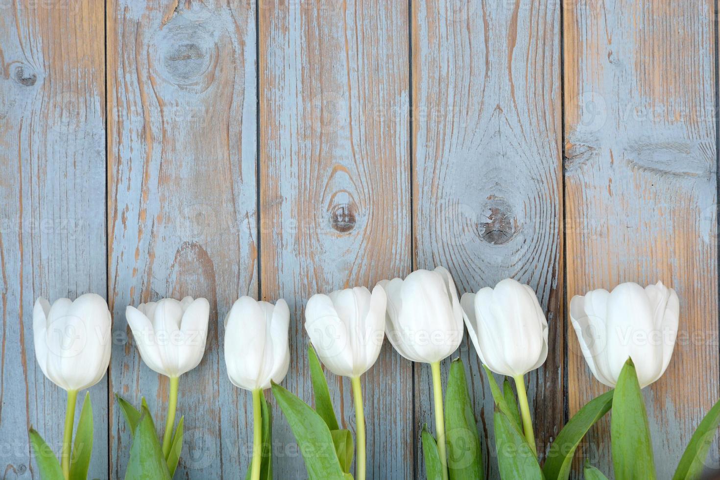 tulipas brancas em fila com um espaço vazio na madeira velha foto