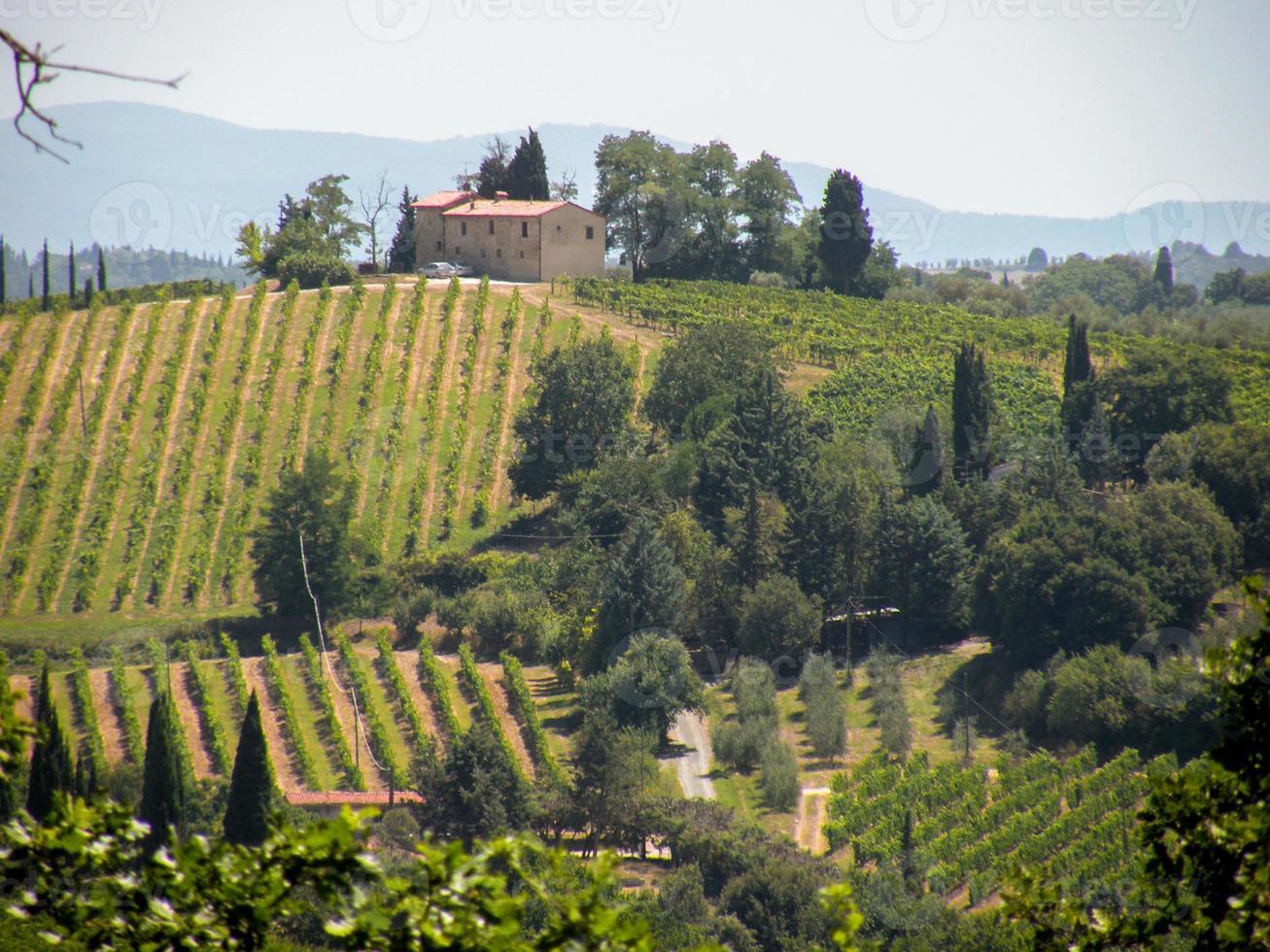 Italian olive farming photo