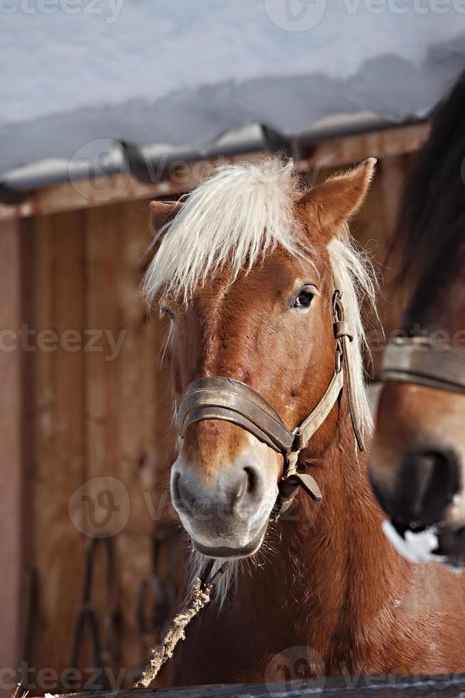 Horse on a farm photo