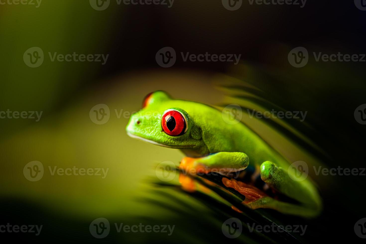 Natural and fresh colorful theme with exotic frog photo