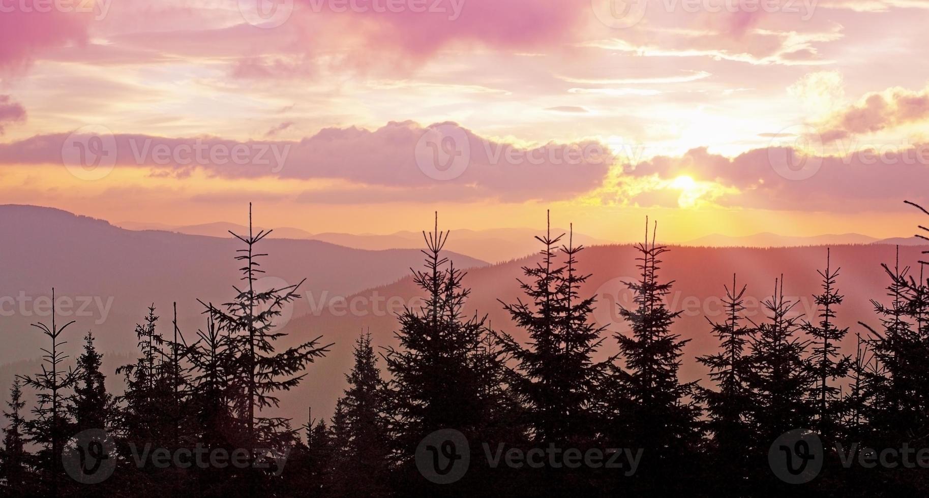 Pink dawn photo