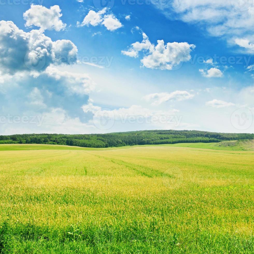campo y cielo foto