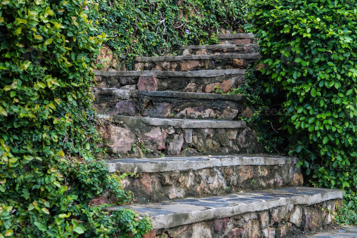 Old stone steps with greenery growing between and in crevices. photo