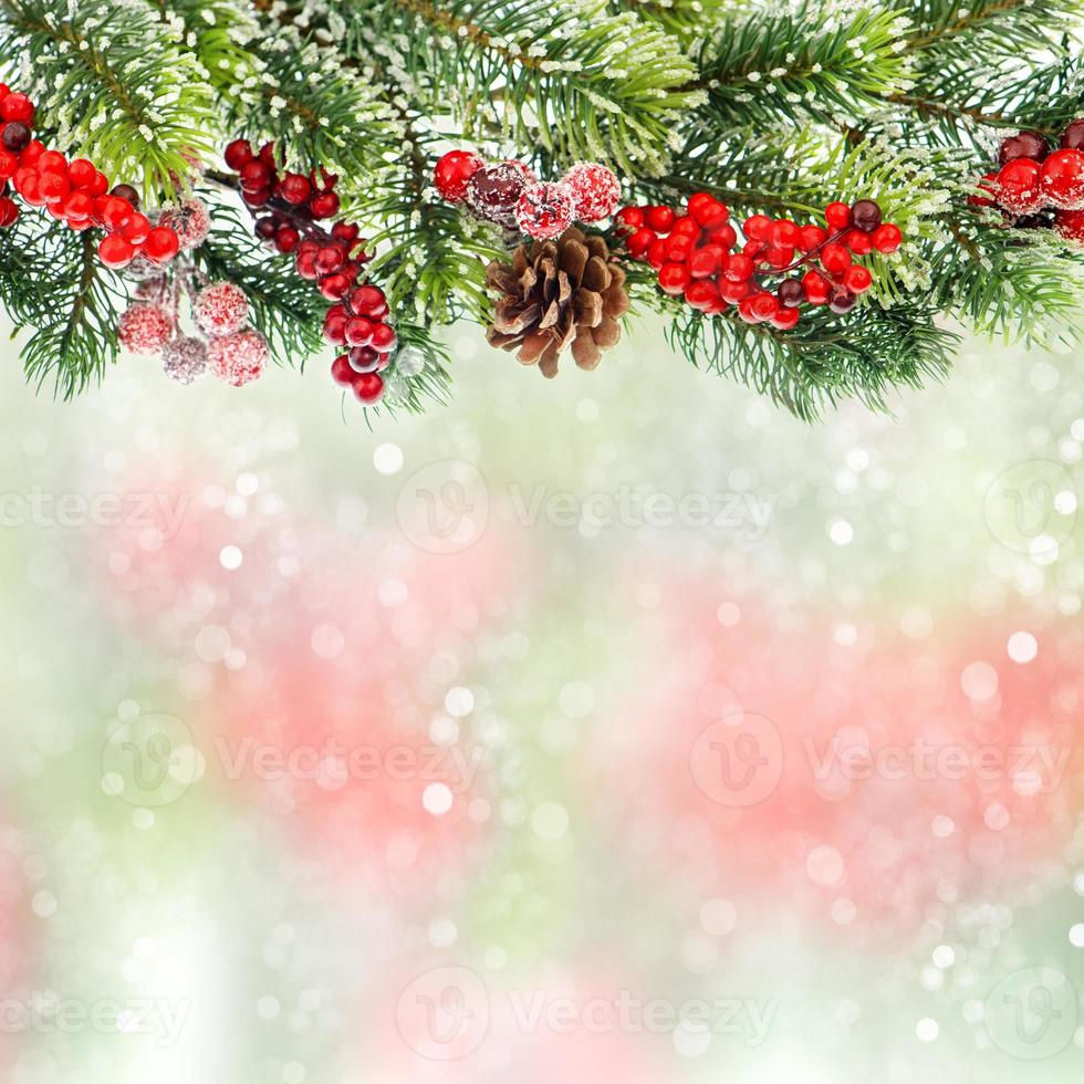 christmas tree branch with red berrries photo