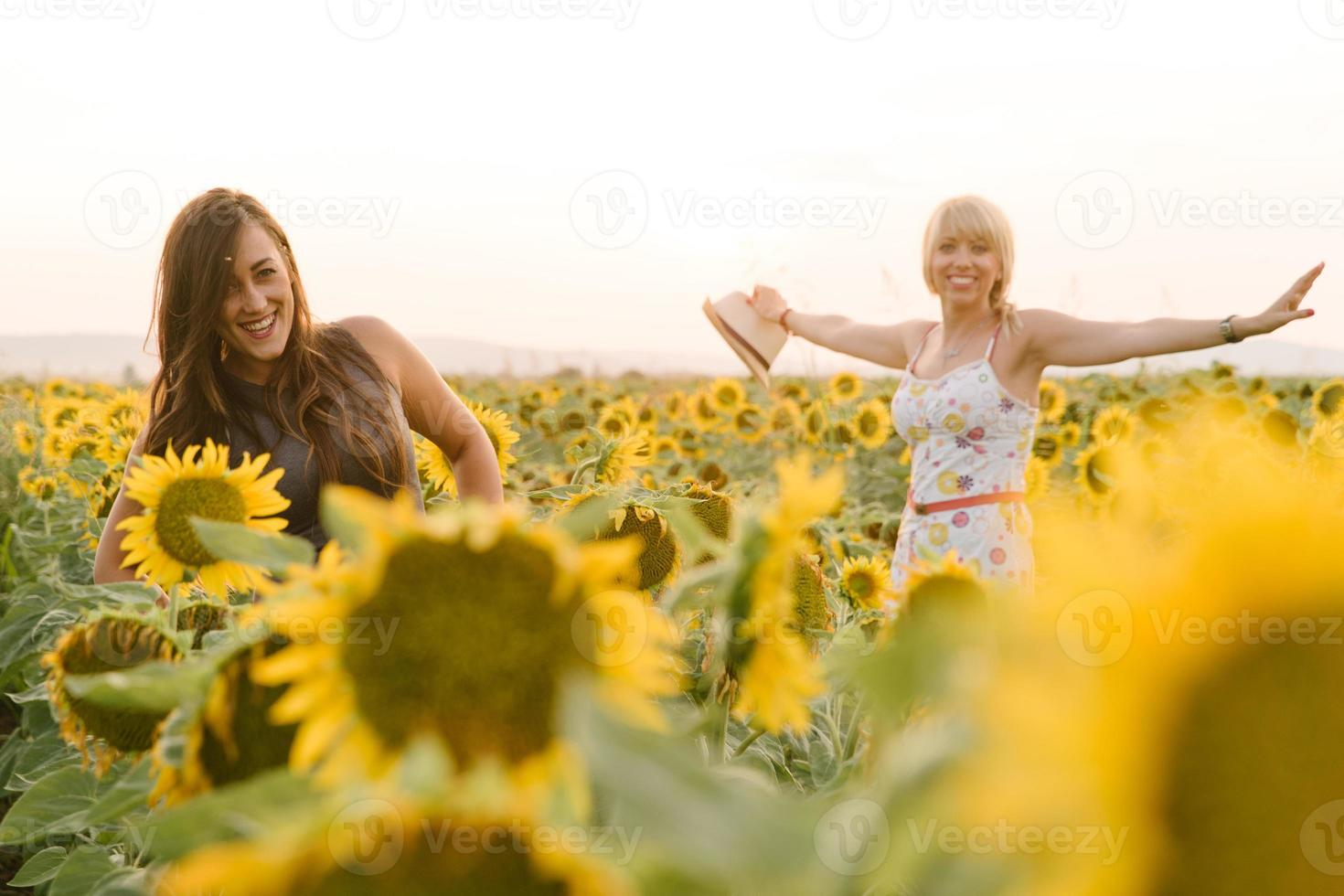 Two girls playing in the sunflower field photo