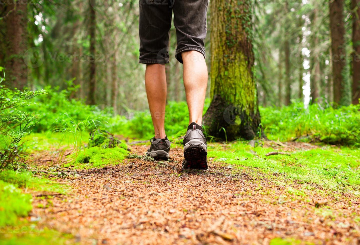 randonnée dans les bois photo