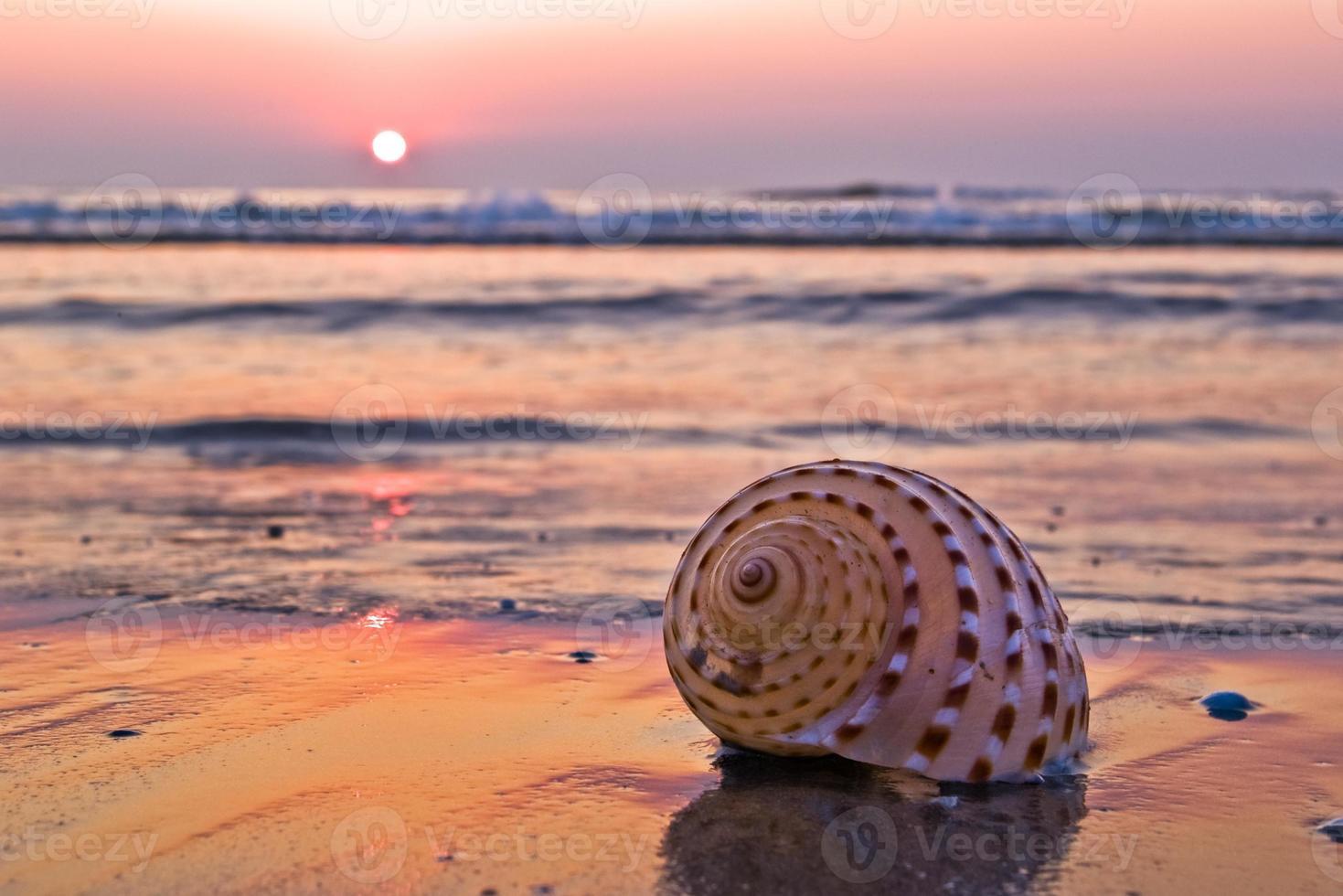 shell on beach photo