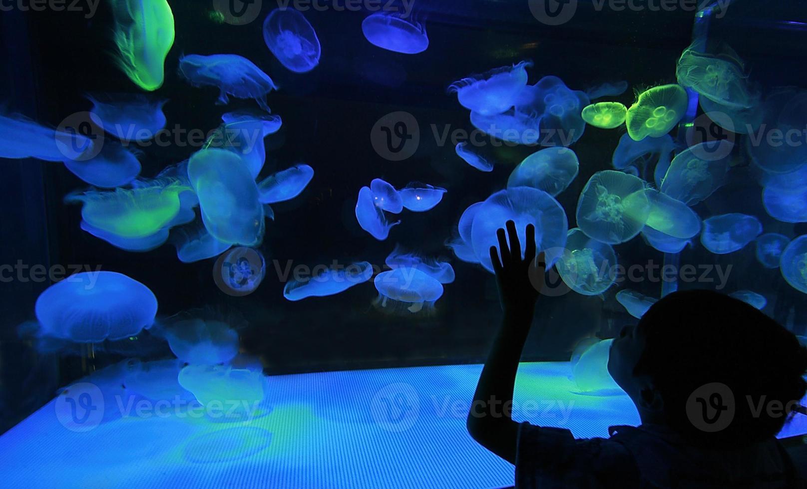 Colorful Jellyfish on dark background photo