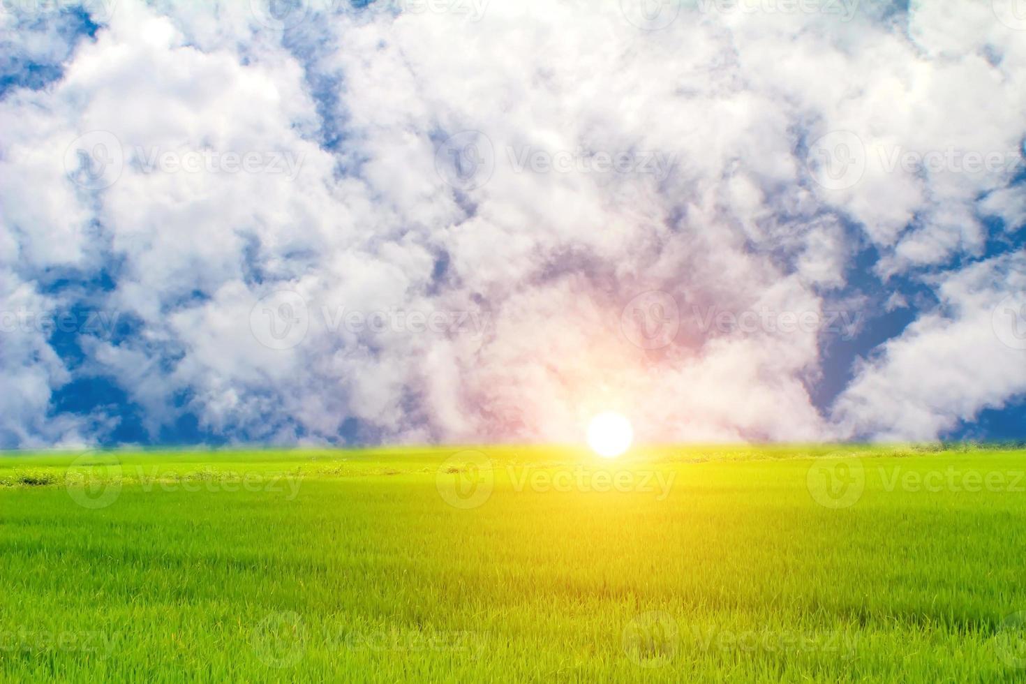 arroz verde e céu foto